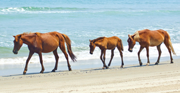 Assateague Island National Seashore at Ocean City