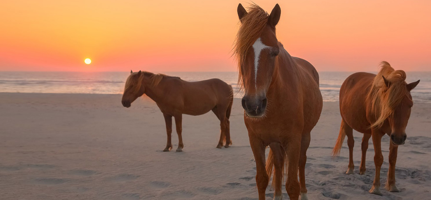 Just Visiting Picture Of Ateague Island National Seas Chincoteague Hotels